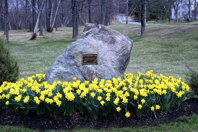 IMG_daffodils